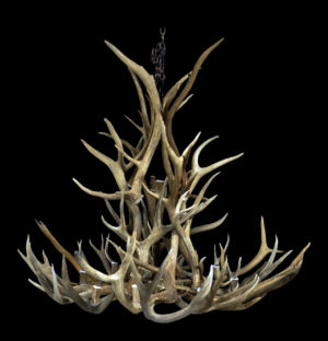 Real antler chandeliers highest quality aloadofball Images